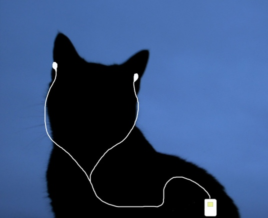 Cat wearing an iPod