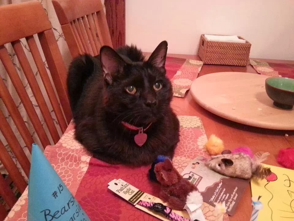 Please Send My Cat Home: What Our Health Dept. Doesn't Want You to Know (1/6)